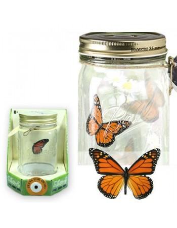 Motyl w słoiku - Monarcha lub Paź Królowej